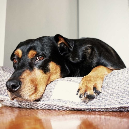 8 Best Dog Beds for Every Dog