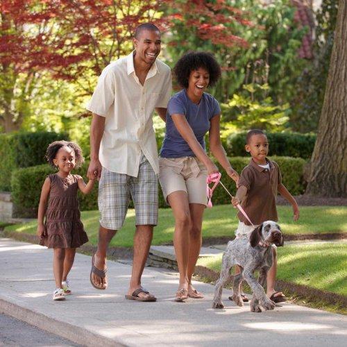 7 Types of Dog Leashes