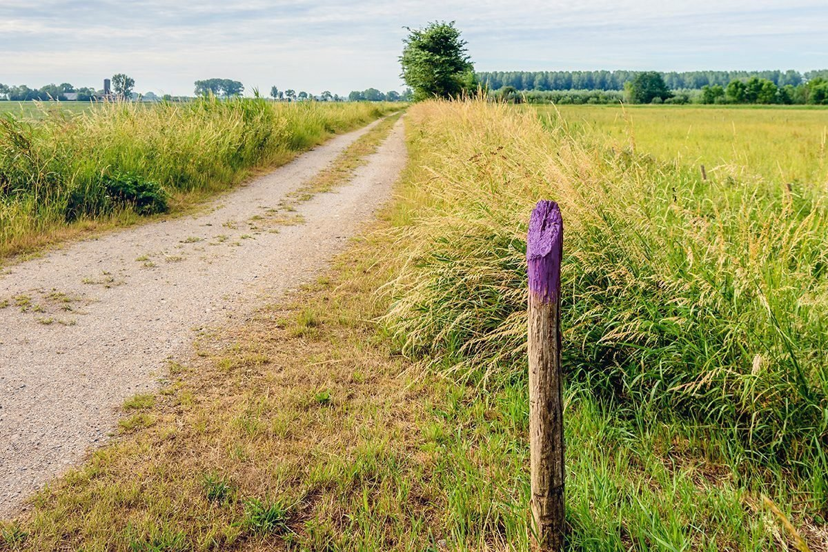 If You See a Painted Purple Fence, This Is What It Means