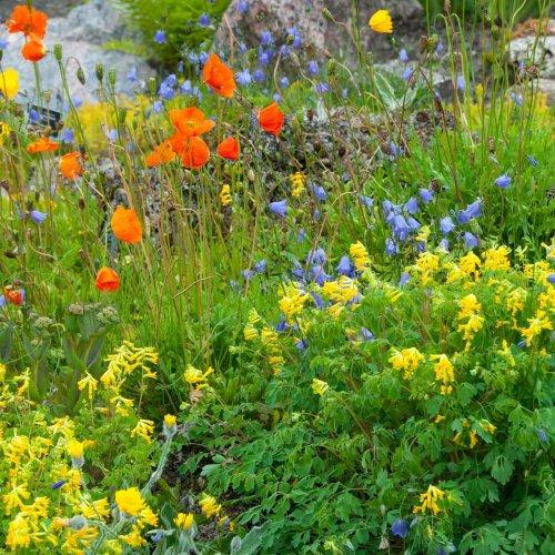 10 Perennials That Bloom the Longest