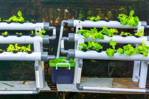 What to Know About Hydroponic Gardens