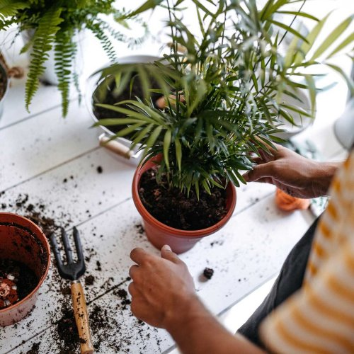 Best Potting Soils for Every Type of Plant