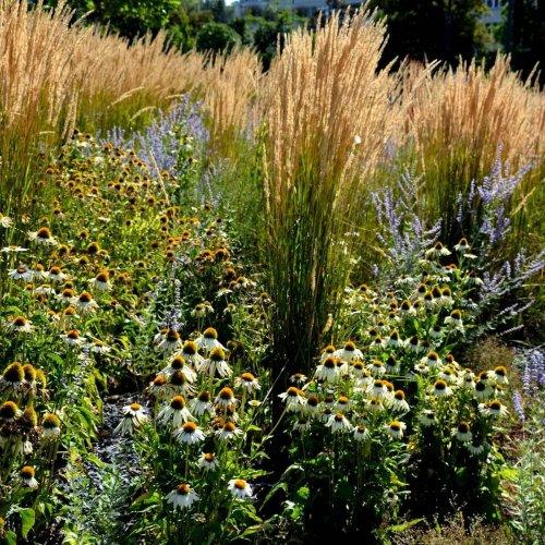 Establishing a Carefree Prairie Garden