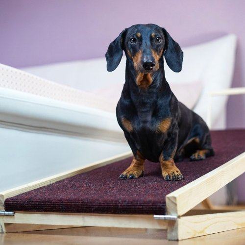 9 Best Pet Ramps for Your Cat or Dog