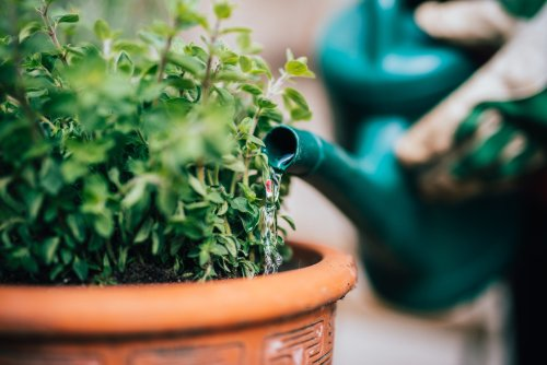 When Should You Stop Watering Your Plants in the Fall?