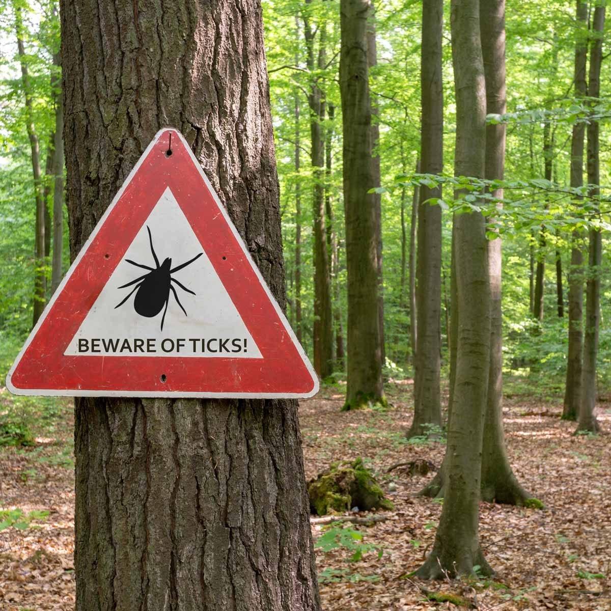How to Avoid Deer Ticks