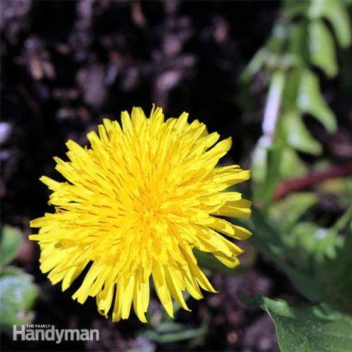 Natural Ways to Kill Weeds