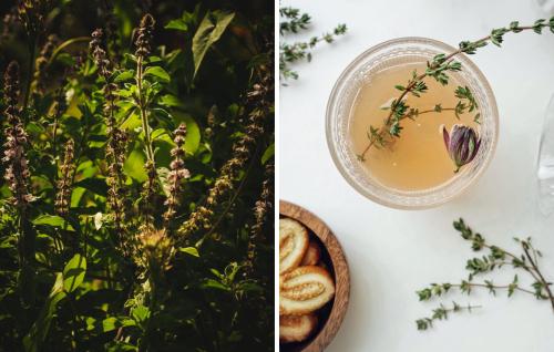 Chá de manjericão: benefícios para a mente e o corpo
