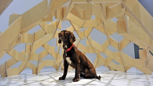 Your dog is ready for a change of scenery too. Here are 16 DIY designs to upgrade their home
