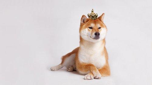 Shiba Inu Altcoin's Popularity Skyrockets, Tops Rival Token Dogecoin