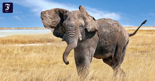Die Zukunft der Natur: Weg frei für die Rückkehr der charismatischen Tiere