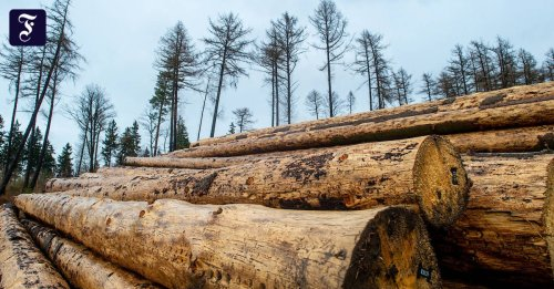 Baumaterial: Holzpreise in Amerika sinken rapide