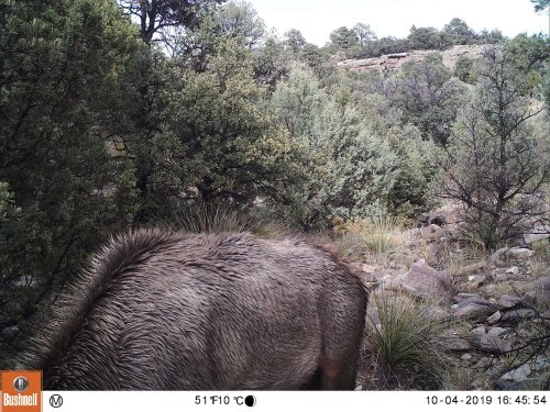 Can You Spot The Mountain Lion Hiding In This Photo?