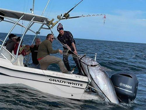 Father and Son Catch 1,000-Pound Tuna off North Carolina