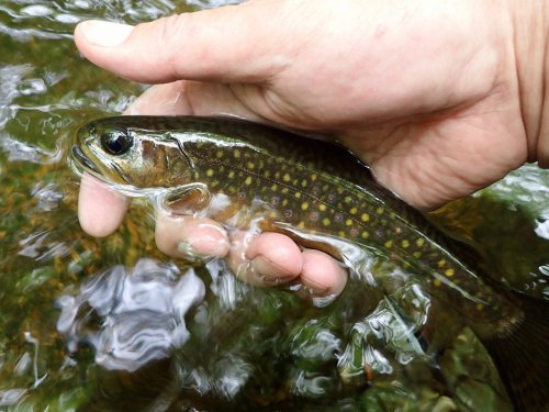 Everything You Need to Know About Fly Fishing in Small Streams