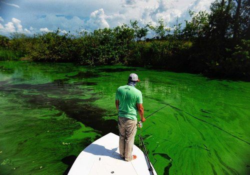 Toxic Wastewater Spills Into Tampa Bay