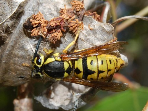 The 10 Worst Insect Stings in the Wild