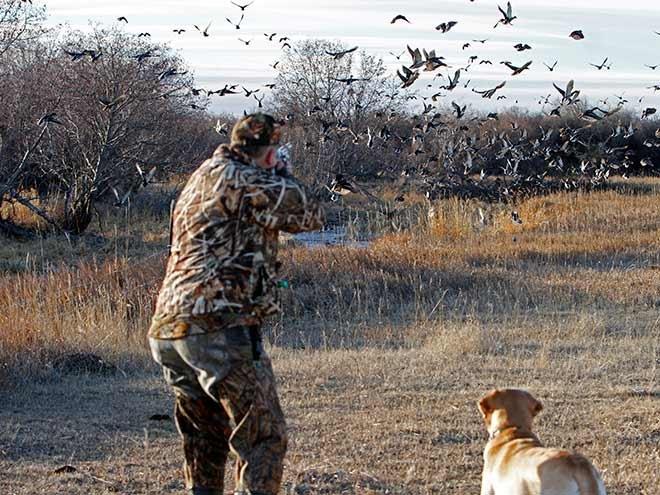 9 Easy Secrets for Jump Shooting Ducks