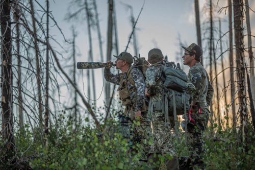 What Elk Calls to Remember (and What to Forget) When Hunting a Big Bull