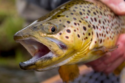 5 Day-Saving Fishing Tips to Catch Pressured Trout
