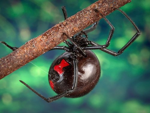 The 12 Deadliest Insects in the World