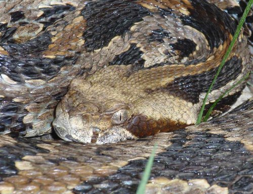 10 of the Most Venomous Snake Species in the World