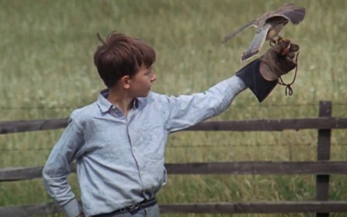 What Makes Us Our Brother's Executioner? On Ken Loach's Kes