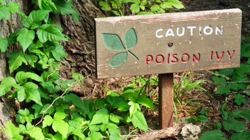 3 Simple Home Remedies That Instantly Take the Itch Out of Poison Ivy Rashes