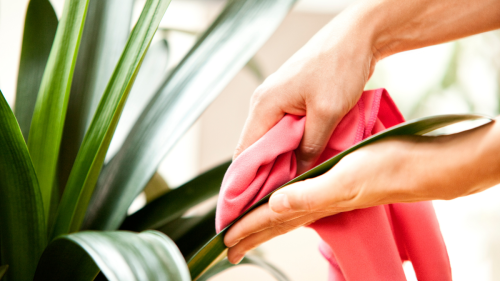 Skipping This Step When Taking Care of Your Plants May Be Why They're Not Thriving