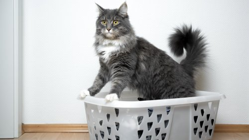4 Surprising Household Items You Should Always Keep Away From Your Cat