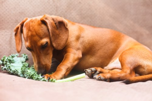 5 Hearty, Healthy Dog Food Recipes You Can Make at Home