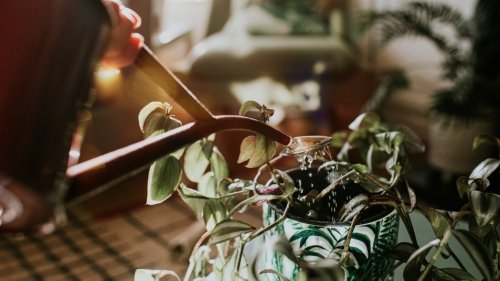 Get Rid of Pesky Gnats on Your House Plants With These Super Simple Tricks