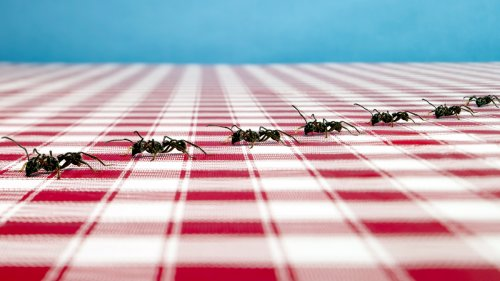 Natural Ways to Get Rid of Ants - First For Women