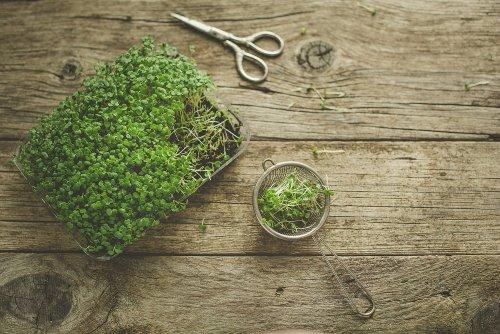 Können Microgreens normales Gemüse ersetzen? - FITBOOK