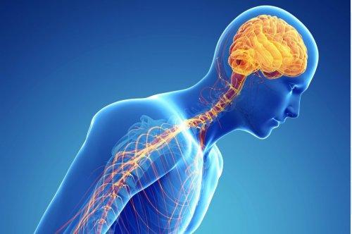 Wirkt der Duftstoff Farnesol gegen Parkinson?