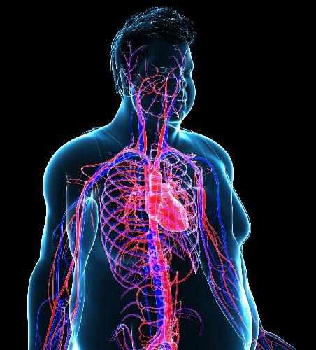 Metabolisches Syndrom – Risikofaktoren und Therapie - FITBOOK