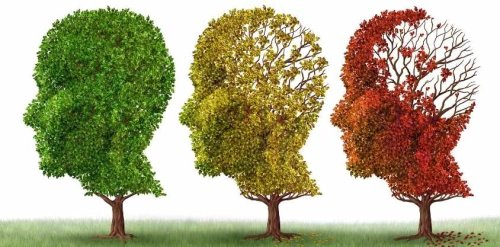 Diet Invented by Scientists Found To Strengthen the Brain and Cut Alzheimer's Ri