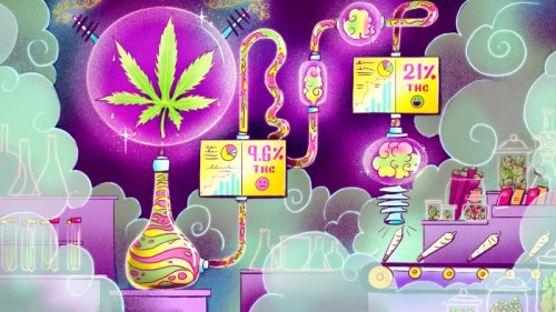 America's Pot Labs Have A THC Problem