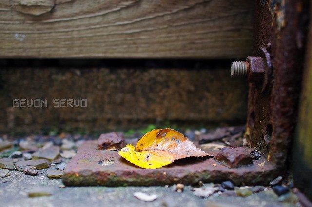 Photography for the Third Season, Autumn - The Phoblographer
