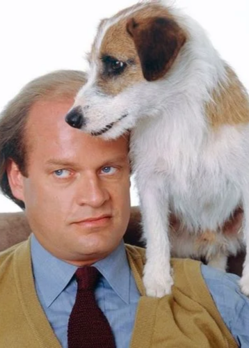 Here's How Much 'Eddie' The Jack Russell Terrier On 'Frasier' Was Paid