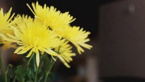 Can Vodka and Hairspray Make Flowers Last Longer?