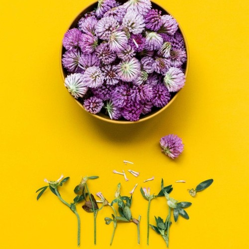 Natural Remedies cover image