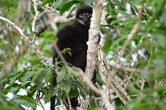 Discover monkey species