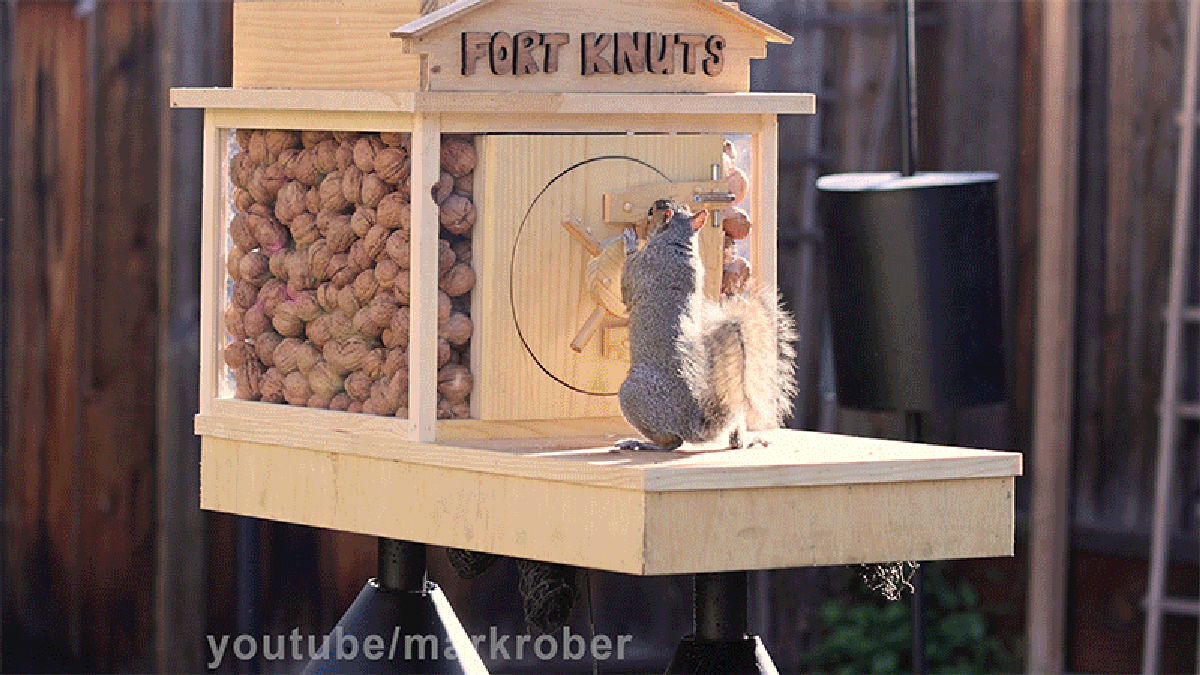 Engineer Builds Obstacle Course to Protect His Nuts, and 4 Cooking Hacks!