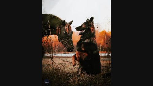 German Shepherd and Horse Are Picture Perfect Pals for Photoshoot