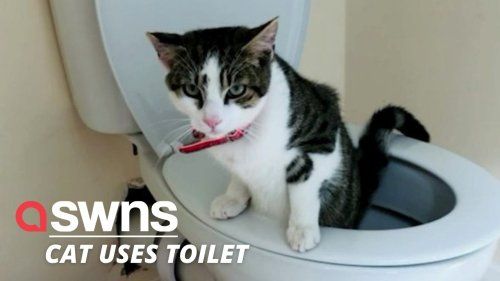 A clever cat has taught himself to use the toilet just like a human! (RAW)