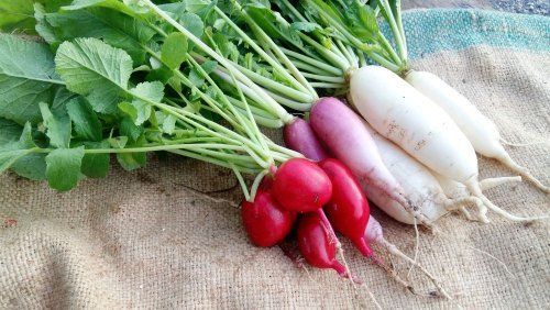 Homegrown Vegetables & Herbs with Serious Health Advantages