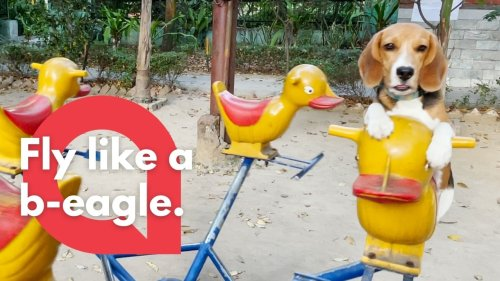 This adorable footage shows a cute beagle puppy enjoying a ride on a playground merry go round (RAW)