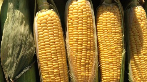 The Real Reason Your Body Doesn't Digest Corn