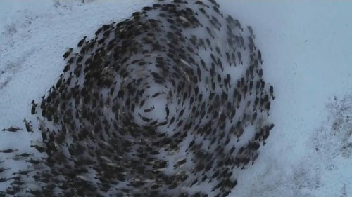 Russian Reindeer circle dance captured by drone camera